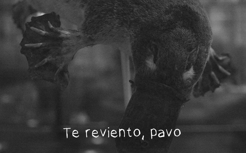 """Animales feos: El ornitorrinco. """"Te reviento, pavo"""""""