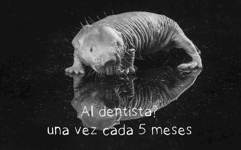 "animal feo: la rata topo desnuda ""Al dentista? Una vez cada 5 meses"""